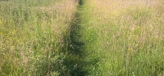 High_Royds_Lake_Path(Kylie_Norman)