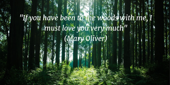 Mary_Oliver_Woods_Quote